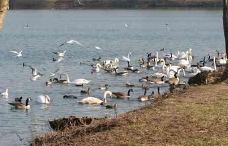 Le lac aux oiseaux