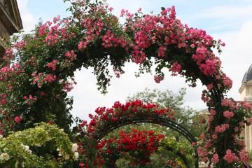 medium_arches_de_roses_15_mai_.jpg