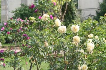 medium_roses_suite_24_av_005.jpg