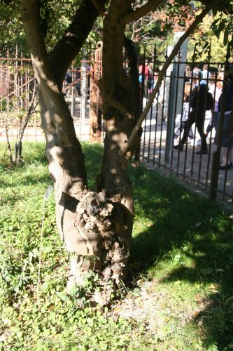 zantho plan tronc paris 10 oct 2010 152.jpg