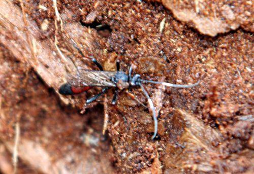 insecte bois p romi 22 février 032.jpg