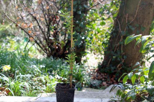 7 lycium n°1 veneux 13 mars 2012 017.jpg