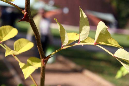 zantho sim arbofolia 9 oct 2010 006.jpg
