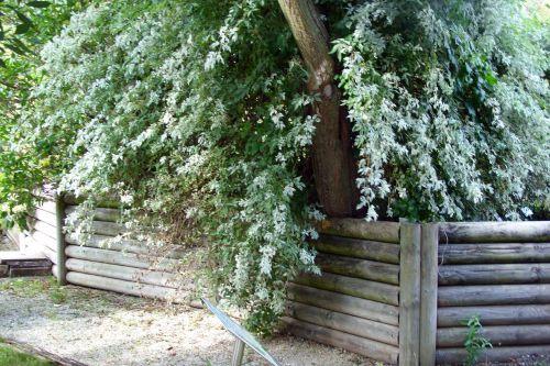 pulverulenta marnay 25 sept 2008 012.jpg