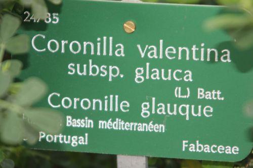 6 coronilla valentina bl paris 21 janv 2012 160 (2).jpg