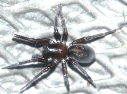 araignée veneux 14 jan 009.jpg