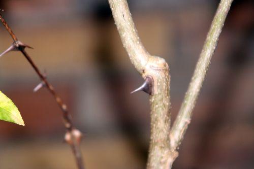 zantho sim arbofolia 9 oct 2010 118.jpg