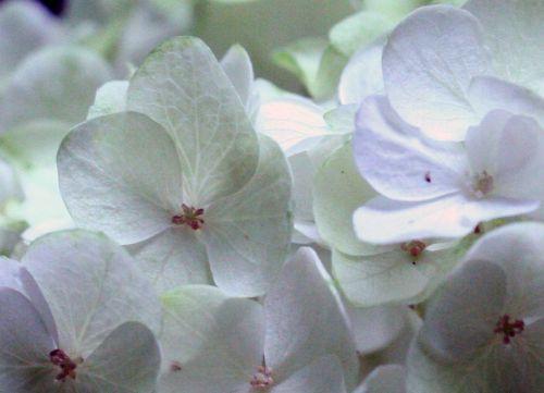 harmony fleurs veneux 25 juil 2010 009.jpg