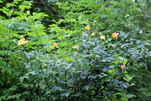 12 sophia romi 4 juin 2012 016.jpg