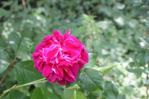 13 falstaff romi 20 juin 2015 007 (3).jpg