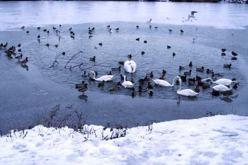 oiseaux neige 21 dec 021.jpg