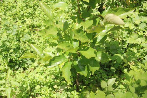 fuyu romilly 22 juil 2012 028.jpg