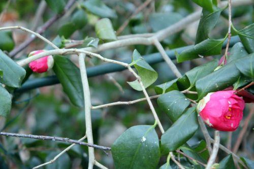 gloire 4 veneux 3 fev 2012 003.jpg
