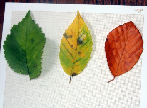 feuilles veneux 20 nov 2012 017.jpg