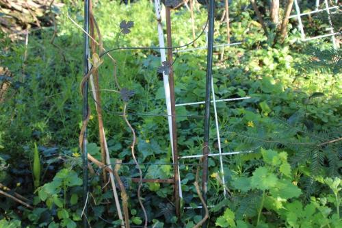 5 actinidia mâle veneux 18 avril 2016 008 (3).jpg