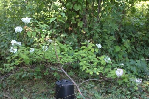 7 vanille fraise romi 2 août 2015 018.jpg