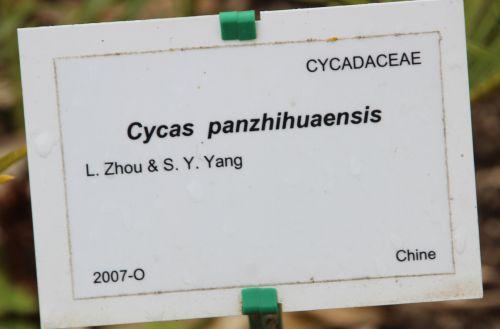 19 cycas panz marnay 8 mai 2014 071.jpg