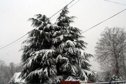 neige 20 déc 2010 074.jpg