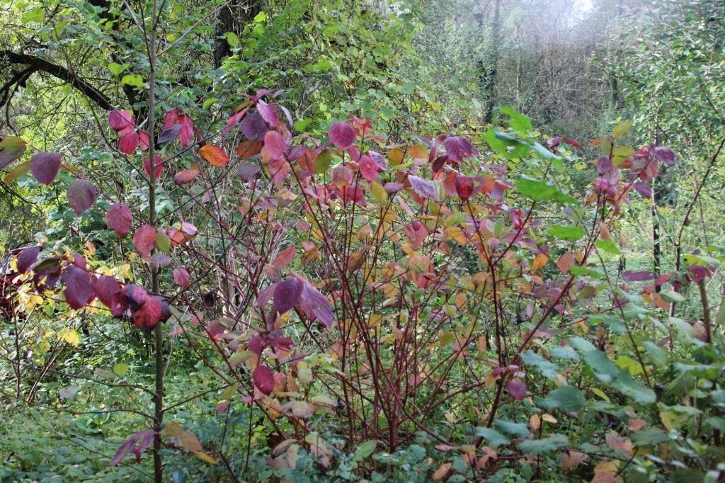 L 39 entr e en couleurs d 39 automne sureaux - Entree d automne ...