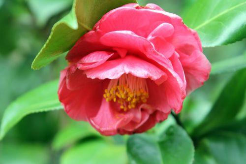 spring veneux 6 avril 2012 007.jpg