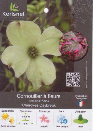 3 cornus florida cherokee daybreak 001 (4).jpg