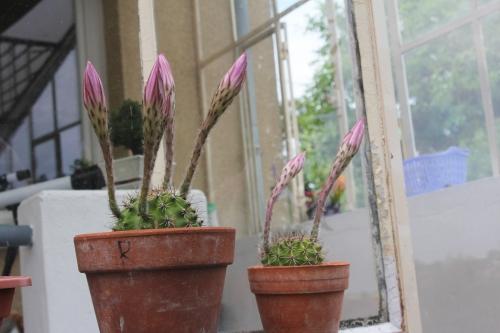 cactus 8 juil 2017 016 (1).jpg