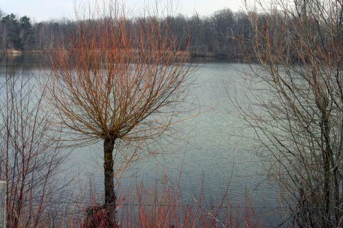 sorques sur tronc 13 mars 029.jpg