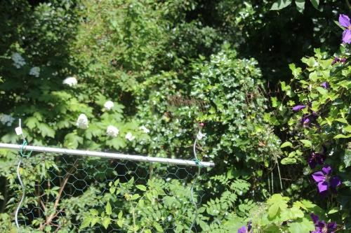 8 hydrangea quercifolia veneux 9 juil 2016 008.jpg