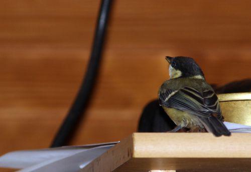 oiseau 15 juin 2014 004.jpg