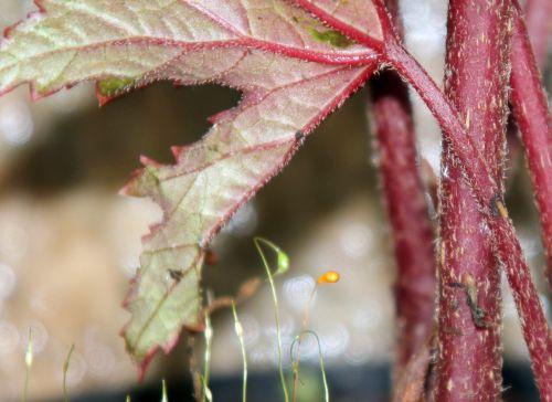 5 begonia f 19 janv 2012 023.jpg