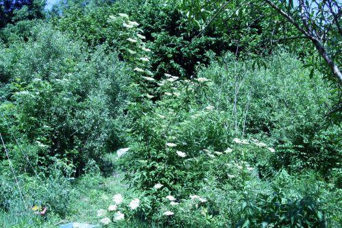 viridis alb romi 4 juin 049.jpg