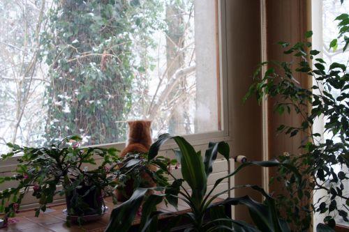 armel fenêtre 8 janvier 002.jpg