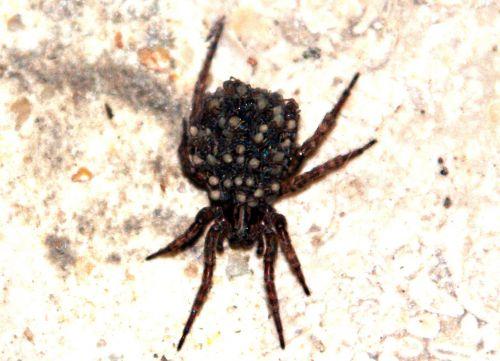 araignée 19 juil 2010 p 004.jpg