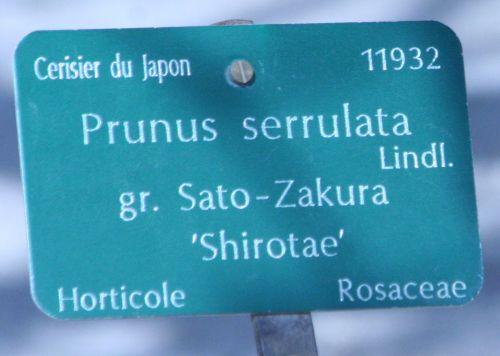 shirotae étiq paris 23 mars 137.jpg