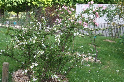 blanc et rose paris 27 avril 100.jpg