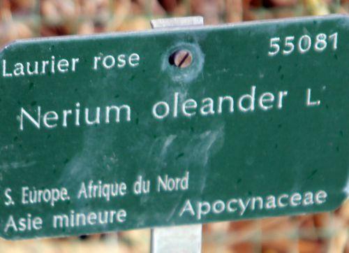 1 nerium paris 21 janv 2012 043.jpg