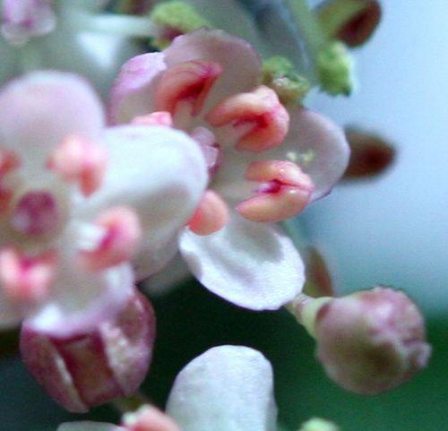 guincho ouverture veneux 20 mai 004.jpg