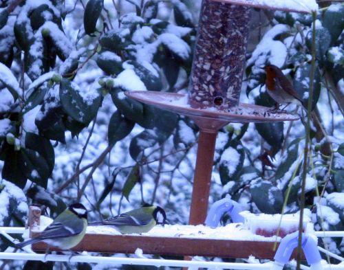 oiseaux 17 dec 016.jpg