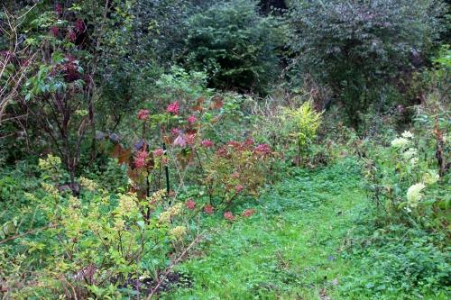 hydrangea romi 14 octobre 2015 024 (1).jpg