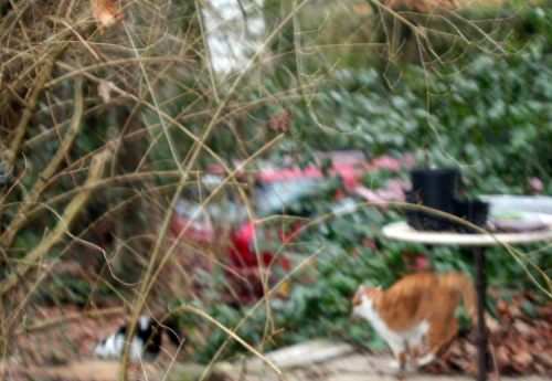chats 26 janvier.jpg