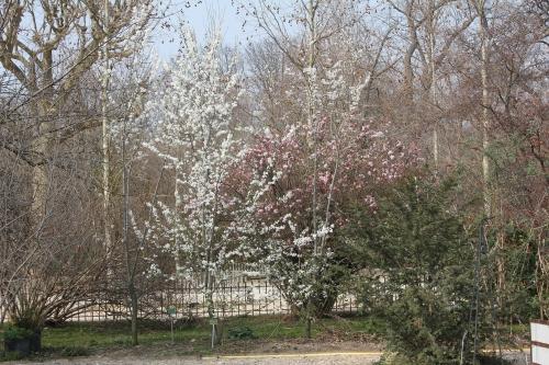 1 fruitiers paris 18 mars 2015 033.jpg