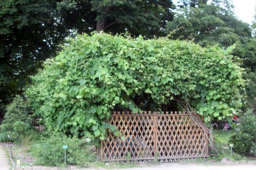 vigne paris 23 juin 2012 440.jpg