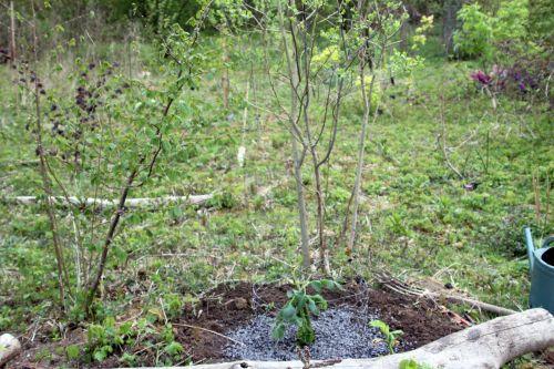 3 romi 20 avril 2012 146.jpg