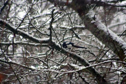 neige pie 20 février 011.jpg