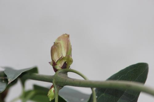 6 apple blossom veneux 29 janv 2017 021.jpg
