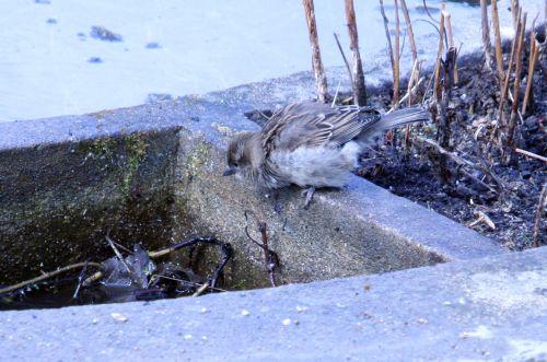bain paris 23 mars 111.jpg
