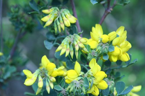 coronilla paris 23 mars 101.jpg