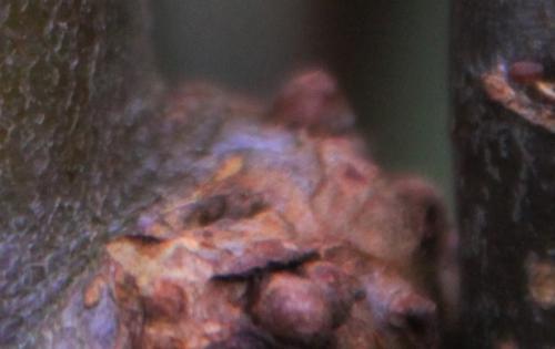 8 inconnu romi 22 déc tumeur 2014 017 (1).jpg