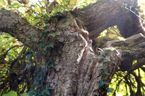 cat arbofolia 9 oct 2010 037.jpg