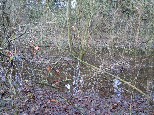 arbres eau romi 9 jan 034.jpg